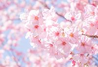 【中野セントラルパーク店限定】お花見プラン